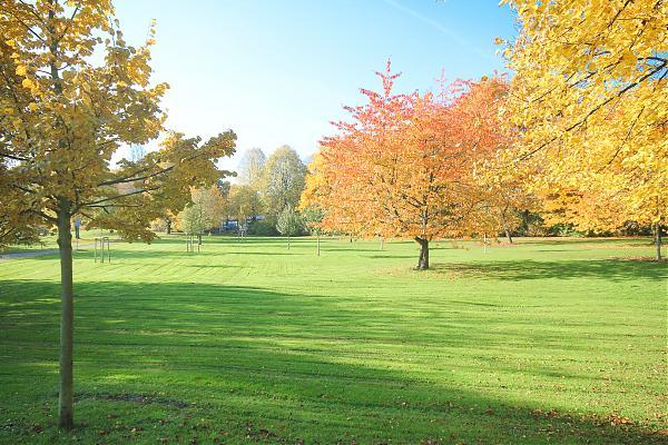 Stieghorster Park